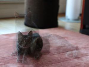 Le chat de Tryphon
