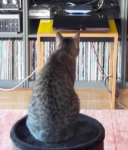 L'ouie du chat , similaire à celle de l'humain en basse fréquence s'étend jusqu'à 60kHz dans l'aigue. L'aide de Schrödi est donc la bienvenu pour les écoutes critiques à Moulinsart